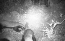 Three Honey Badgers on March 13, 2011