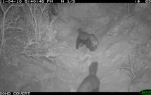 Four Honey Badgers at Qasor on April 10, 2011
